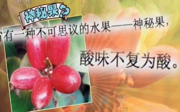 有一种水果食用后会使酸味变甜是真的。云南省有一种不可思议的水果——神秘果——辨真伪网
