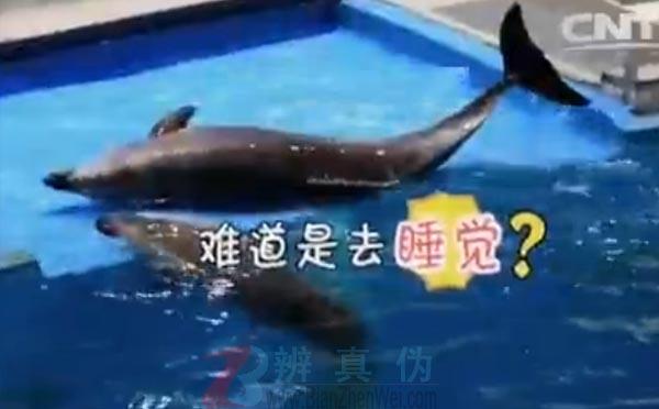 海豚睡觉睁一只眼闭一只眼是网络谣言。静静的漂浮在水面上,它是睡着了——辨真伪网