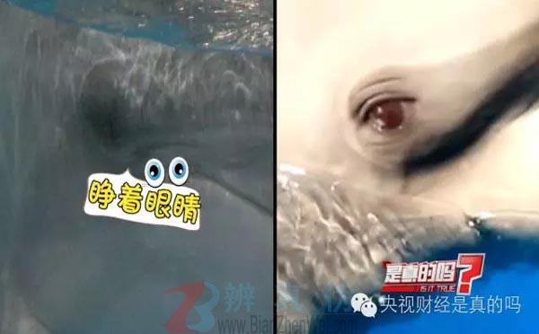 海豚睡觉睁一只眼闭一只眼是网络谣言。海豚睡觉时两只眼睛都是睁开的——辨真伪网