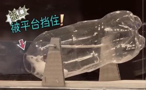 用塑料瓶做捕鼠器可轻松抓老鼠是真的。当老鼠从瓶口进去后,由于瓶口重量增加,导致瓶口位置下沉——辨真伪网