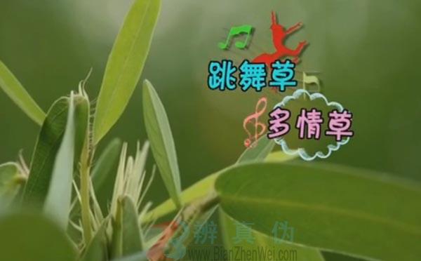 有一种草听到音乐会跳舞是真的。随着音乐舞动的植物叫跳舞草——辨真伪网