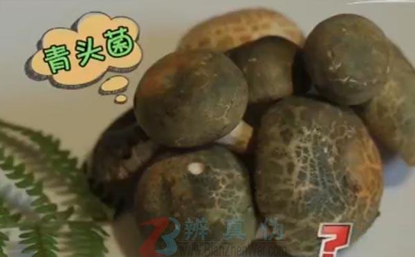 颜色鲜艳的蘑菇都有毒蘑菇是网络谣言。这种菌叫青头菌,它就是一个例外——辨真伪网