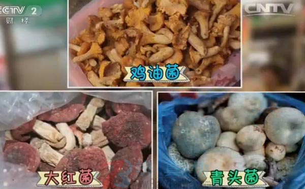 颜色鲜艳的蘑菇都有毒蘑菇是网络谣言。三种颜色鲜艳的蘑菇,分别是鸡油菌、大红菌和青头菌——辨真伪网