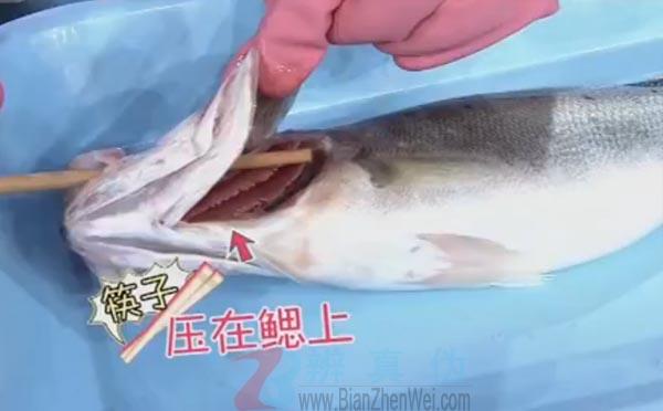 用筷子就能轻松去除鱼内脏是真的。压住鱼鳃把筷子往鱼肚子里面插——辨真伪网