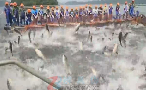 渔民可以通过水花判断鱼群,捕捞场面