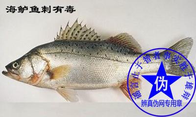 海鲈鱼刺有毒是网络谣言——辨真伪网