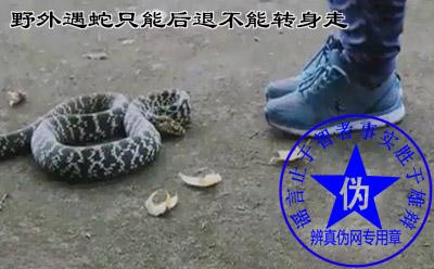 野外遇蛇只能后退不能转身走的说法是假的。遇蛇不动也不靠谱——辨真伪网