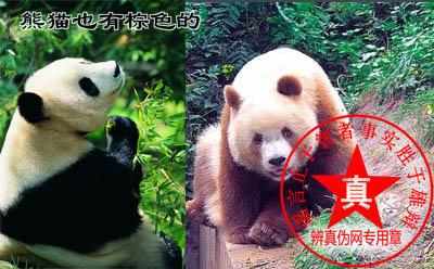 熊猫也有棕色的是真的——辨真伪网