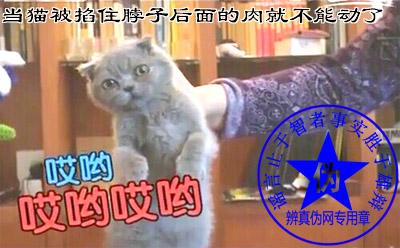 当猫被掐住脖子后面的肉就不能动了的方法是假的,所以在爱护猫咪的同时也要保护好自已——辨真伪网