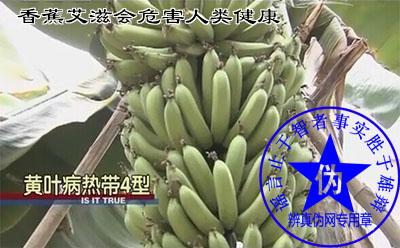 """香蕉艾滋会危害人类健康的说法是假的。只是行业内的一个俗称,学名叫""""黄叶病热带4型""""与人类的艾滋病无任何关系。得病的香蕉树不产香蕉——辨真伪网"""