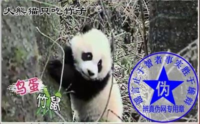 大熊猫只吃竹子是网络谣言——辨真伪网