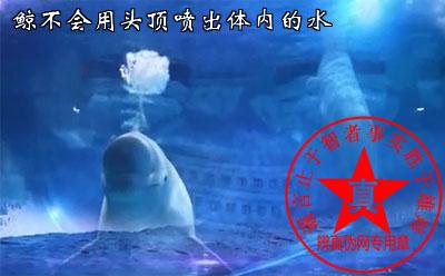 鲸不会用头顶喷出体内的水是真的——辨真伪网