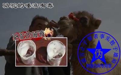 骆驼的唾液有毒是网络谣言——辨真伪网