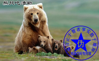 熊只吃活物是假的。遇到熊将死能活命的说法也是不对的——辨真伪网