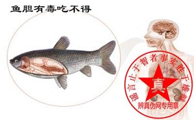 鱼胆有毒吃不得是真的。为了生命安全大家还是远离鱼胆的好——辨真伪网