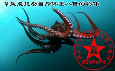 章鱼在水中能拖动自身体重八倍的物体是真的——辨真伪网