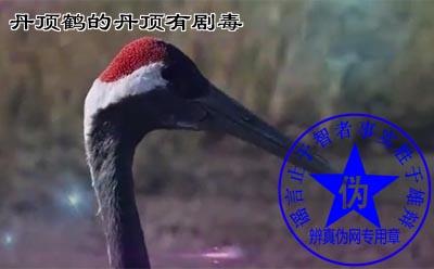 丹顶鹤的丹顶有剧毒网络谣言。由于古时候的提纯技术并不成熟,砒霜因纯度较低而呈现红色而被称为鹤顶红——辨真伪网