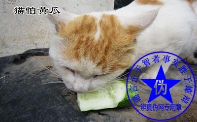 猫怕黄瓜是网络谣言——辨真伪网