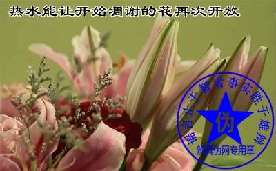 热水能让开始凋谢的花再次开放是网络谣言。可以加白醋和白糖(2%——3%)——辨真伪网