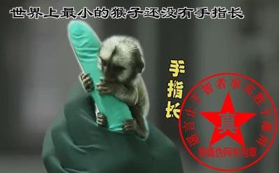世界上最小的猴子还没有手指长真的。走私野生动物是违法的,另外从防疫角度最好不要饲养——辨真伪网