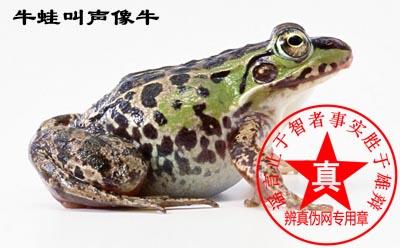 牛蛙之所以叫牛蛙,因为叫声像牛是真的——辨真伪网