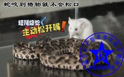 蛇咬到猎物就不会松口是网络谣言。剧毒蛇要保护自己的毒牙咬完会松口——辨真伪网