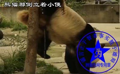 熊猫都倒立着小便是假的——辨真伪网