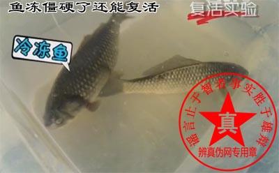 鱼冻僵硬了还能复活是真的。这种方法对冷冻液本身提出了更高的要求,所以在水产品的冷冻中目前并不常见——辨真伪网