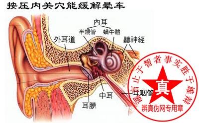按压内关穴能缓解晕车是真的。中医还有其它一些穴位,比如说这个合谷穴——辨真伪网